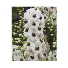 Ostróżka ogrodowa (Delphinium cultorum) Magic Fountain White Dark Bee